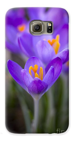 Spring Has Sprung Galaxy S6 Case