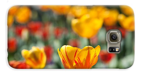Spring Is Upon Us Galaxy S6 Case by Nathan Rupert
