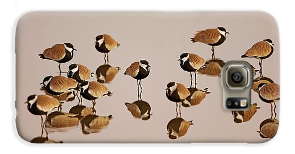 Spur-winged Lapwing (vanellus Spinosus) Galaxy S6 Case by Photostock-israel