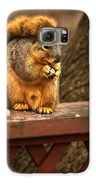 Squirrel Eating A Peanut Galaxy S6 Case by  Onyonet  Photo Studios