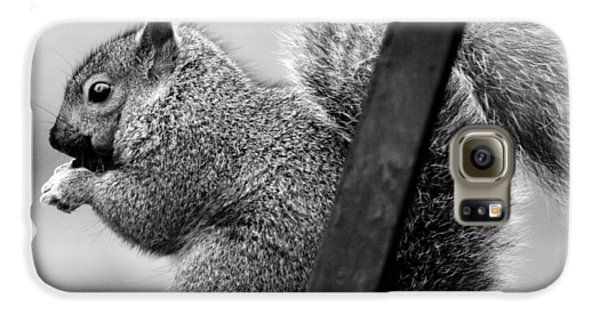 Galaxy S6 Case featuring the photograph Squirrels by Ricky L Jones