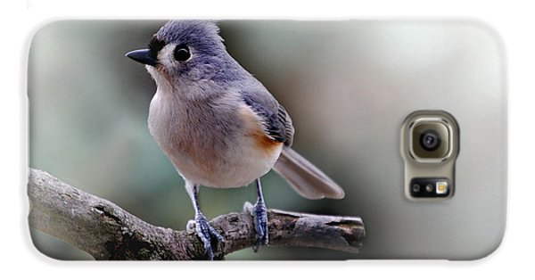 Titmouse Galaxy S6 Case - Spring Time Titmouse by Skip Willits