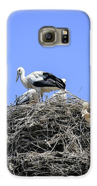 Storks Nesting Galaxy S6 Case by Photostock-israel