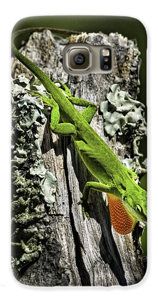 Stressed Anole Galaxy S6 Case
