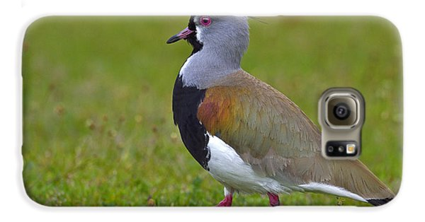 Strutting Lapwing Galaxy S6 Case by Tony Beck