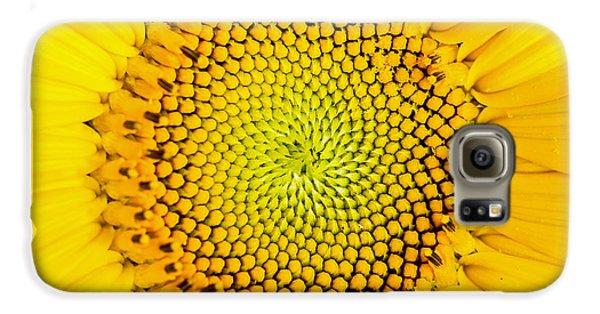Sunflower Galaxy S6 Case - Sunflower  by Edward Fielding