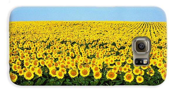 Sunflower Field, North Dakota, Usa Galaxy S6 Case by Panoramic Images
