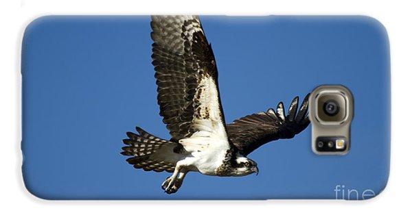Take Flight Galaxy S6 Case