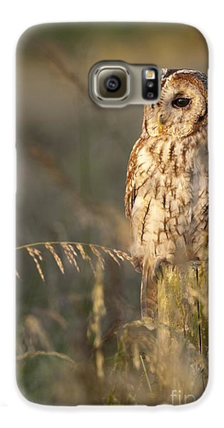 Tawny Owl Galaxy S6 Case by Tim Gainey