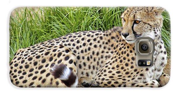 The Beautiful Cheetah Galaxy S6 Case