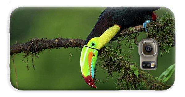 Toucan Galaxy S6 Case - The Colors Of Costa Rica by Fabio Ferretto