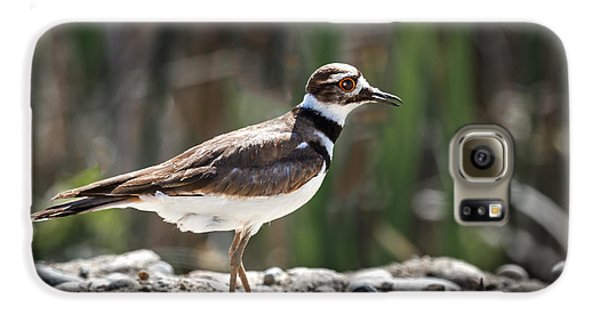 The Killdeer Galaxy S6 Case by Robert Bales