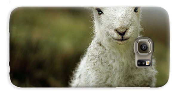 Mammals Galaxy S6 Case - The Lamb by Angel Ciesniarska