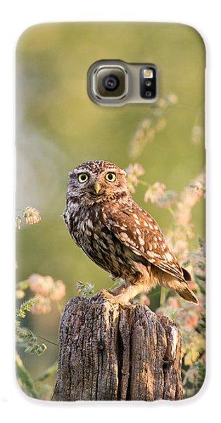 Owl Galaxy S6 Case - The Little Owl by Roeselien Raimond
