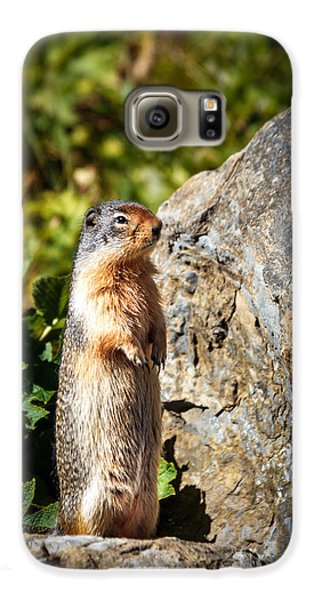 The Marmot Galaxy S6 Case by Robert Bales
