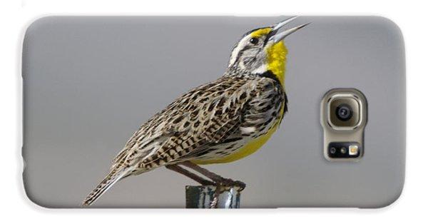 Meadowlark Galaxy S6 Case - The Meadowlark Sings  by Jeff Swan