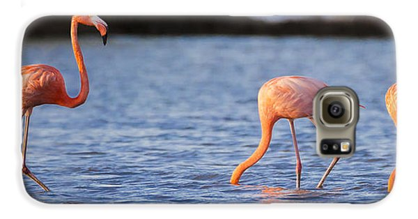 The Three Flamingos Galaxy S6 Case by Adam Romanowicz