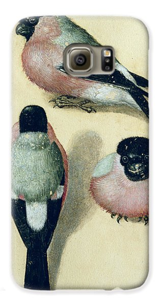 Three Studies Of A Bullfinch Galaxy S6 Case by Albrecht Durer