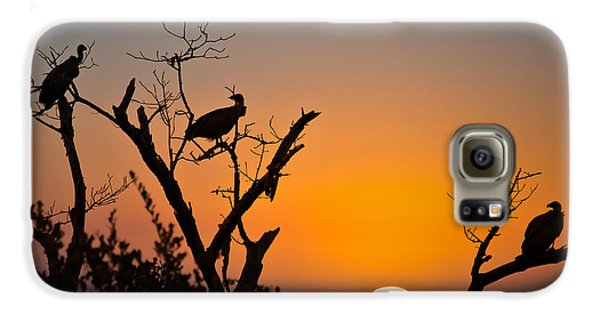Vulture Galaxy S6 Case - Three Vultures Waiting by Delphimages Photo Creations