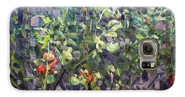 Tomato Galaxy S6 Case - Tomatoes In Viola's Garden  by Ylli Haruni