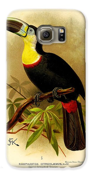 Toucan Galaxy S6 Case - Toucan by Dreyer Wildlife Print Collections