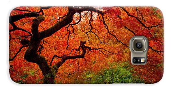 Tree Fire Galaxy S6 Case