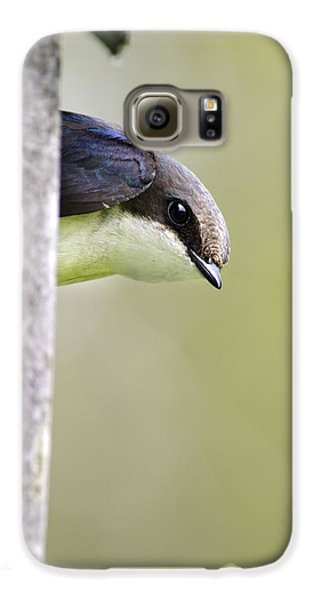 Tree Swallow Closeup Galaxy S6 Case by Christina Rollo