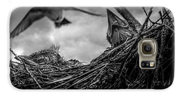 Tree Swallows In Nest Galaxy S6 Case by Bob Orsillo