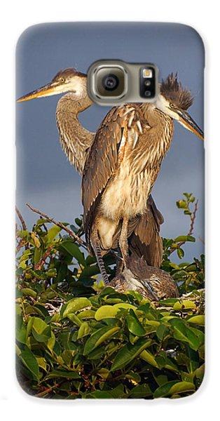 Trio Of Blue Heron Chicks Galaxy S6 Case