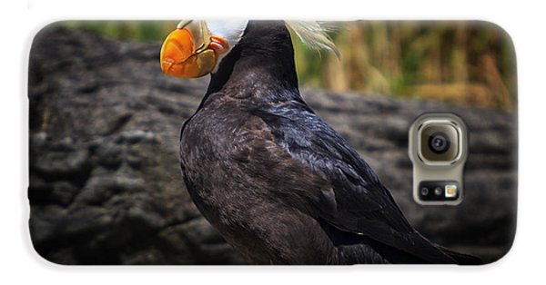 Tufted Puffin Galaxy S6 Case by Mark Kiver