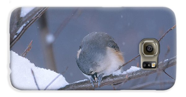 Tufted Titmouse Eating Seeds Galaxy S6 Case by Paul J. Fusco