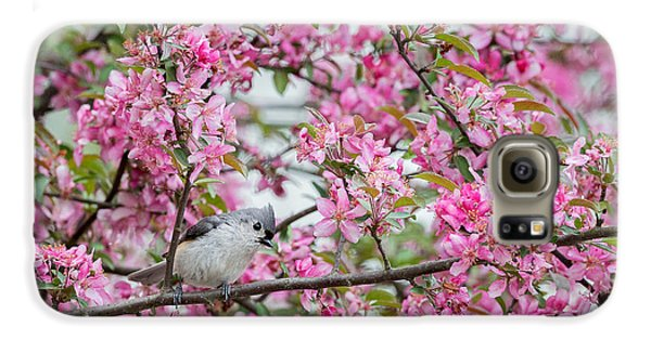 Tufted Titmouse In A Pear Tree Galaxy S6 Case