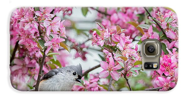 Tufted Titmouse In A Pear Tree Square Galaxy S6 Case by Bill Wakeley