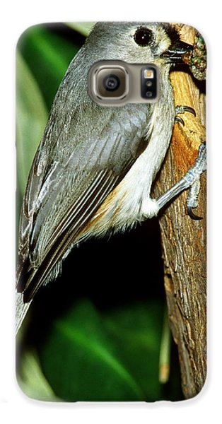 Tufted Titmouse Galaxy S6 Case