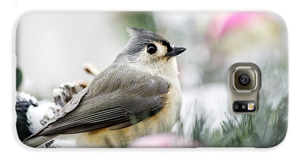Tufted Titmouse Portrait Galaxy S6 Case by Christina Rollo