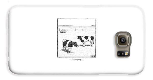 Two Spotted Cows Looking At A Jersey Cow Galaxy S6 Case