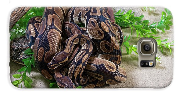 Two Burmese Pythons Python Bivittatus Galaxy S6 Case