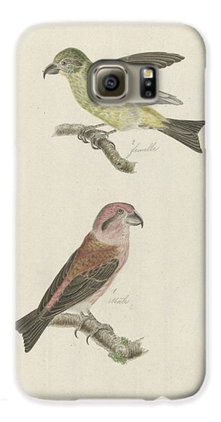 Two Crossbills, Possibly Christiaan Sepp Galaxy S6 Case by Quint Lox