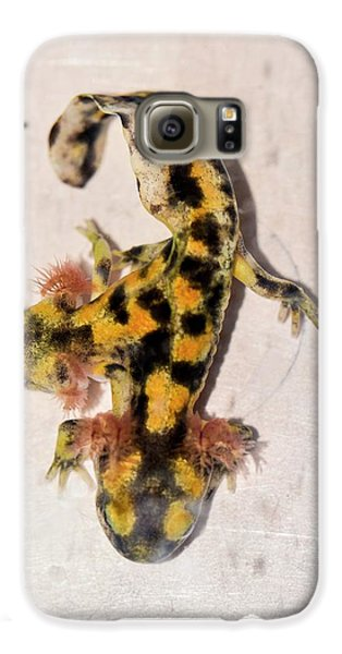 Salamanders Galaxy S6 Case - Two-headed Fire Salamander by Photostock-israel