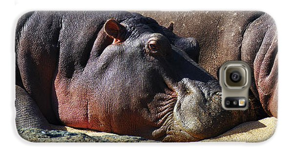Two Hippos Sleeping On Riverbank Galaxy S6 Case by Johan Swanepoel