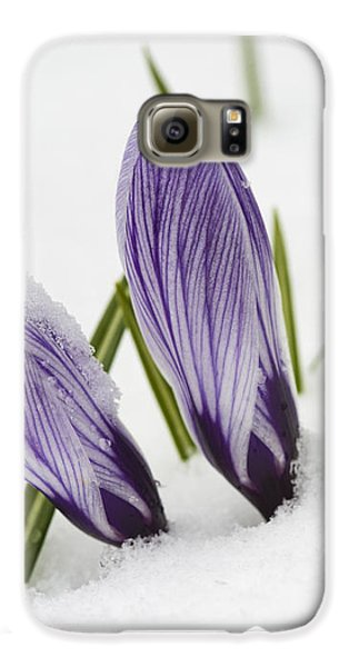 Two Purple Crocuses In Spring With Snow Galaxy S6 Case