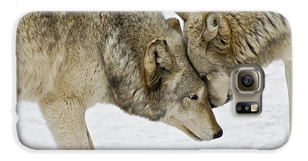 Two Wolves In  A Staredown Galaxy S6 Case