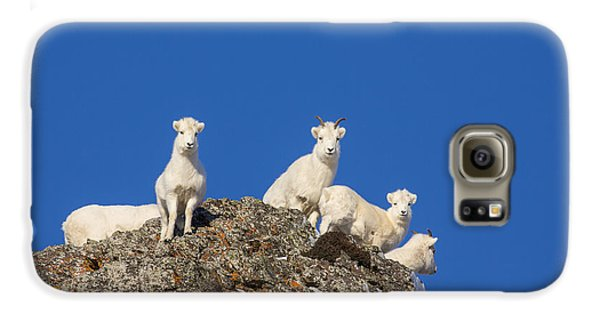 Sheep Galaxy S6 Case - Under The Blues Skies Of Winter by Tim Grams