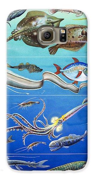 Underwater Creatures Montage Galaxy S6 Case by English School