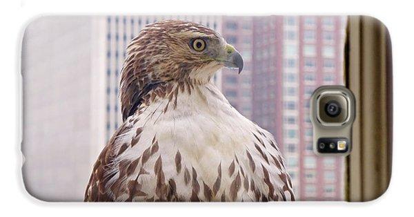 Urban Red-tailed Hawk Galaxy S6 Case