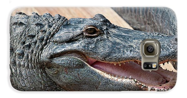 Usa, Florida Gatorland, Florida Galaxy S6 Case by Michael Defreitas