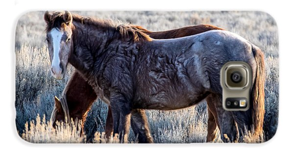 Velvet - Young Colt In Sand Wash Basin Galaxy S6 Case