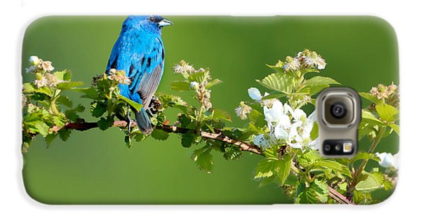 Bunting Galaxy S6 Case - Vibrance Of Spring by Rob Blair