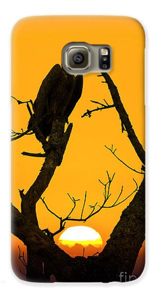 Vulture Galaxy S6 Case - Vulture by Delphimages Photo Creations
