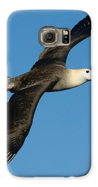 Waved Albatross Diomedea Irrorata Galaxy S6 Case by Panoramic Images